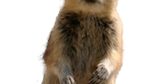 Check Out My Chipmunk